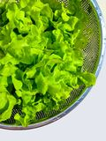 Lettuce for healthy, green vegetable Royalty Free Stock Images