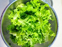 Lettuce for healthy, green vegetable Stock Photography