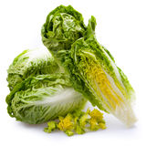 Lettuce hearts isolated Royalty Free Stock Images