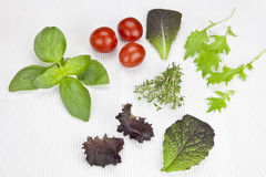 Lettuce and herbs. Variety of lettuces and herbs with tomatoes on a white mat Royalty Free Stock Images