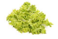 Lettuce isolated Stock Image