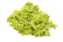 Lettuce isolated Stock Image