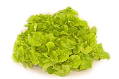 Lettuce Isolated Stock Photography