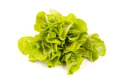 Lettuce isolated on white Stock Photos