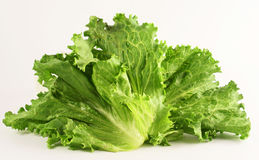 Lettuce isolated on white. Photo of vegetables green lettuce Stock Photography