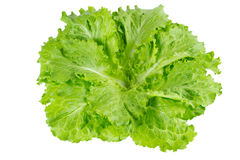 Lettuce. In isolated white background Royalty Free Stock Photography