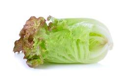 Lettuce isolated on the white background Stock Image