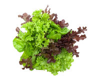 Lettuce isolated on white background Royalty Free Stock Image
