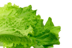 Lettuce isolated on white background eco healthy lifestyle Royalty Free Stock Photo