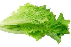Lettuce isolated on white background eco healthy lifestyle Royalty Free Stock Photos