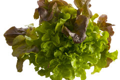Lettuce isolated on white. Stock Photography