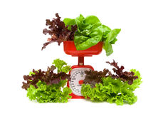 Lettuce and kitchen scales isolated on white background Royalty Free Stock Image