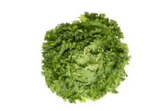 Lettuce (Lactuca sativa var. capitata), close up Stock Image