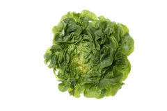 Lettuce (Lactuca sativa var. capitata), close up Royalty Free Stock Image