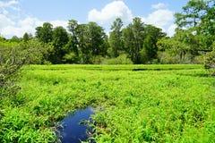 Lettuce lake. Taken in Tampa, florida stock photos