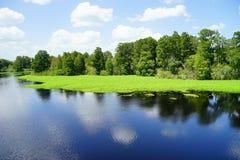 Lettuce lake. Taken in Tampa, florida stock photo