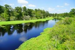 Lettuce lake. Taken in Tampa, florida royalty free stock photography