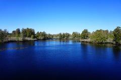 Lettuce lake. Taken in Tampa, florida royalty free stock image