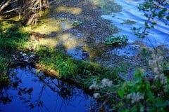 Lettuce lake. Taken in Tampa, florida stock photography