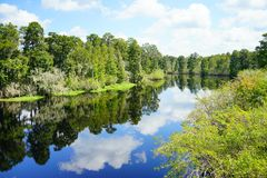 Lettuce lake. Taken in Tampa, florida royalty free stock images