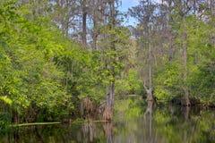 Lettuce Lake Park Landscape. Landscape scene of calm swamp waters of Lettuce Lake in Tampa, Florida stock photo