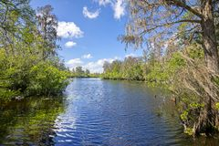 Lettuce Lake River, Ground Level. The Lettuce Lake river in Tampa, Florida at ground level royalty free stock image