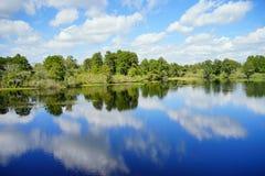 Lettuce lake. Taken in Tampa, florida royalty free stock photo