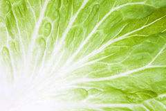 Lettuce leaf Royalty Free Stock Images