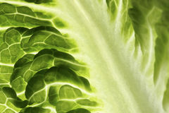 Lettuce leaf Stock Image