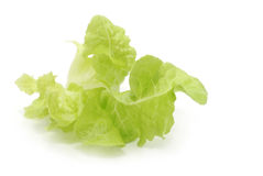 Lettuce Leaf. Isolated on white. This is a curly butter stock images