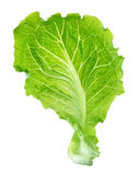 Lettuce leaf Royalty Free Stock Photo