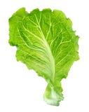 Lettuce leaf. The lettuce leaf on white background Royalty Free Stock Photo