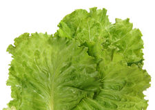 Lettuce leaf Stock Images