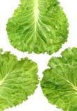 Lettuce leaf stock photo