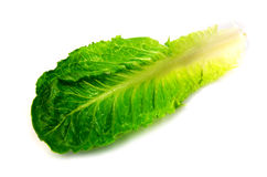 Lettuce Leaf Stock Photos