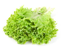 Lettuce leaf bunch Royalty Free Stock Photos