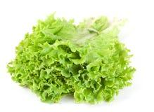 Lettuce leaf bunch royalty free stock photos