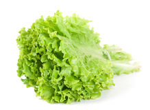 Lettuce leaf bunch Stock Images