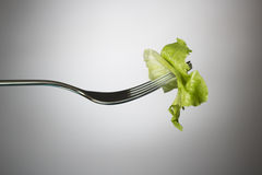 Lettuce leaf on a fork Royalty Free Stock Image