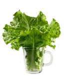 Lettuce leaf in glass cup Royalty Free Stock Image