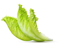 Lettuce leaf isolated Stock Photo