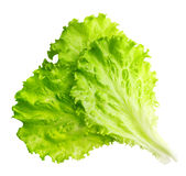 Lettuce leaf isolated Royalty Free Stock Images