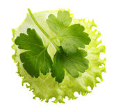 Lettuce leaf isolated Royalty Free Stock Photos