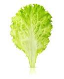 Lettuce leaf isolated Royalty Free Stock Image