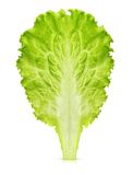 Lettuce leaf isolated Stock Photography