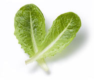 Lettuce Romaine Leaf. Two romaine lettuce leaves on a white background Stock Photography