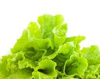 Lettuce leafs Stock Image