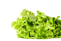 Lettuce leafs isolated on white. Close-up Stock Photos