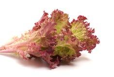Lettuce leaves. Stock Images