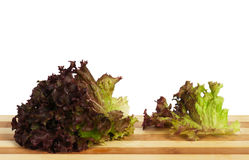 Lettuce leaves Stock Photography